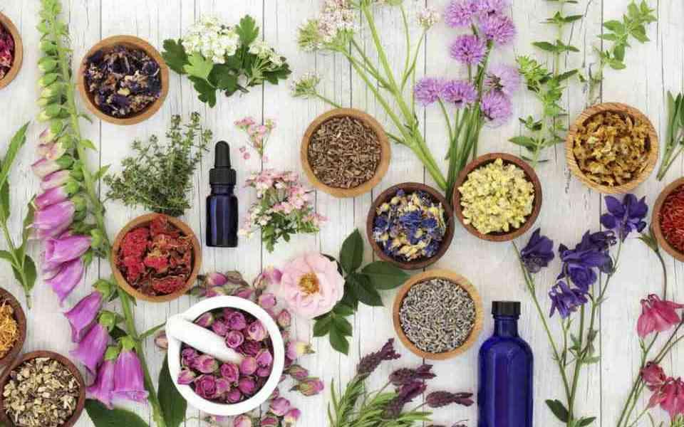 βότανα, βότανα με ιατρική χρήση, δημοφιλή βότανα, χαμομήλι, σκόρδο, τζίνσενγκ, τζίνγκο μπιλόμπα, βαλεριάνα, χρήση βοτάνων
