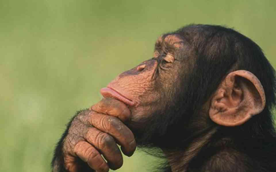 το παράδοξο του χιμπατζή, ο χιμπατζής μέσα μας, η συναισθηματική μας φύση, η ανθρώπινη φύση