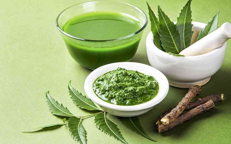 neem, δέντρο neem , οφέλη neem, ιδιότητες neem