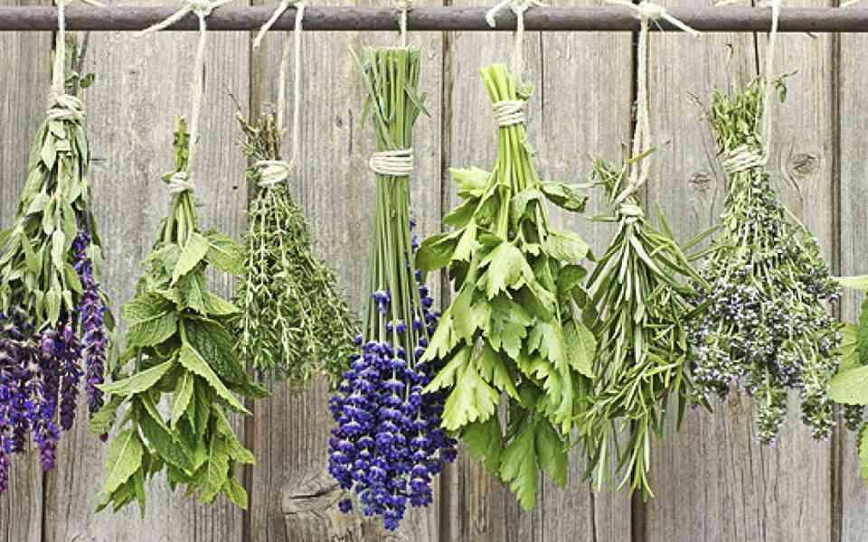 ελληνικά βότανα, βότανα, ρίγανη, χαμομήλι, μέντα, βασιλικός, οφέλη ελληνικών βοτάνων