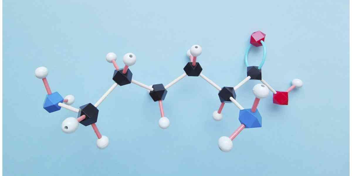 αμινοξέα, απαραίτητα αμινοξέα, ρόλοι αμινοξέων, λειτουργίες αμινοξέων