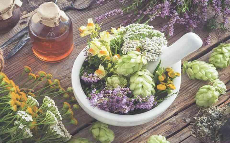 βότανα με αντιϊκές ιδιότητες, φασκόμηλο, ρίγανη, εχινάκεια, σκόρδο, βασιλικός