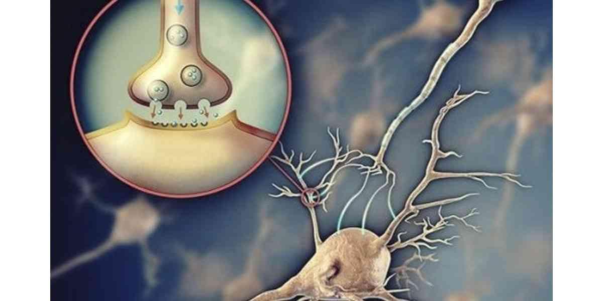 ακετυλοχολίνη, λειτουργίες ακετυλοχολίνης, δράση ακετυλοχολίνης, τροφές που ενισχύουν την ακετυλοχολίνη, ακετυλοχολίνη και νευρικό σύστημα